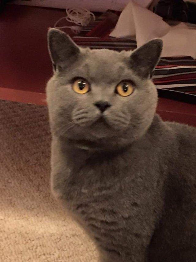 Pet Sitting Software