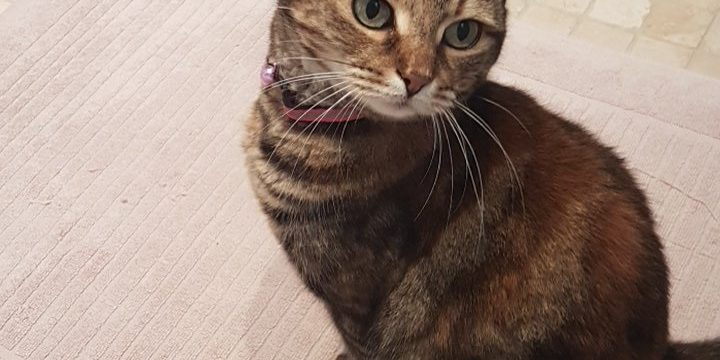 Coco the cat