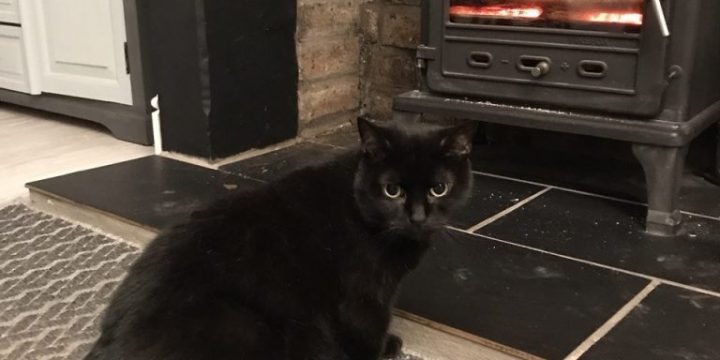Bruno keeping warm by the fire