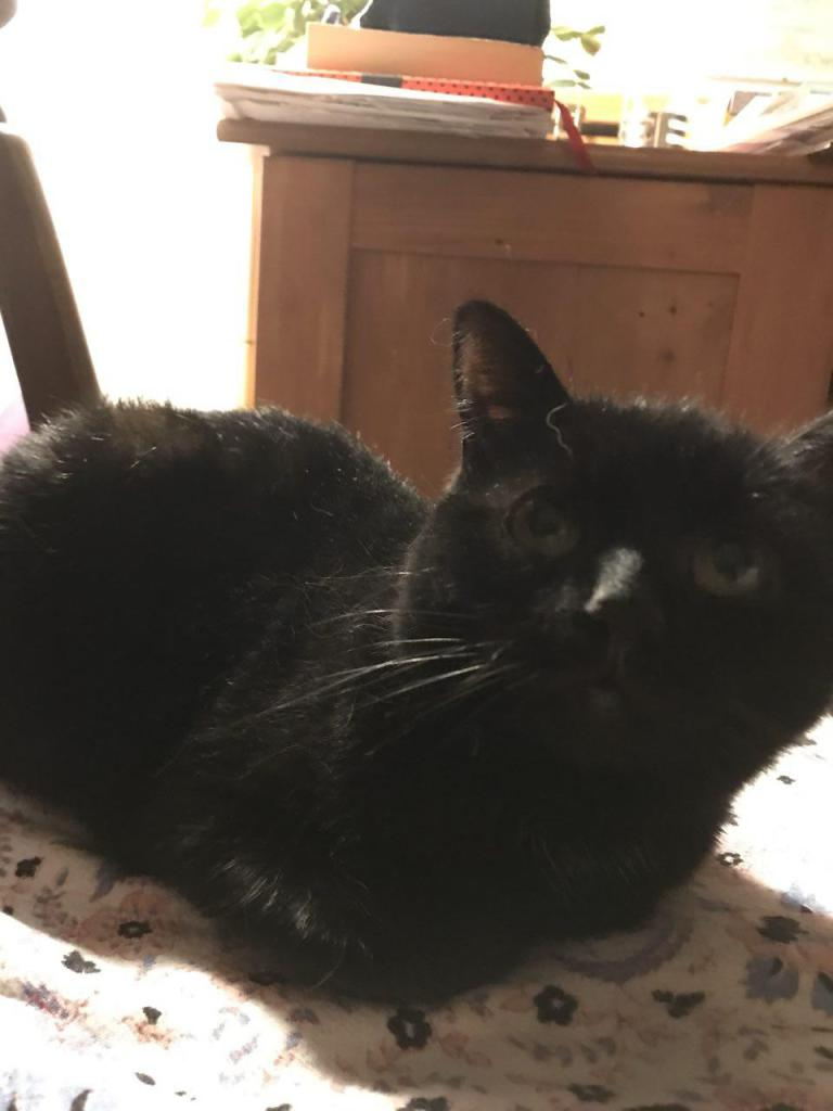 Purrrrrrrfect black cat